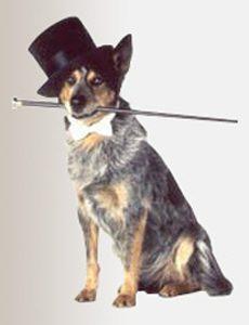 Philadelphia Philpot Top Hat for Dog in Daewoo TV Commercial