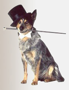 Philadelphia Philpot Top Hat for Dog in Daewoo TV Commercial